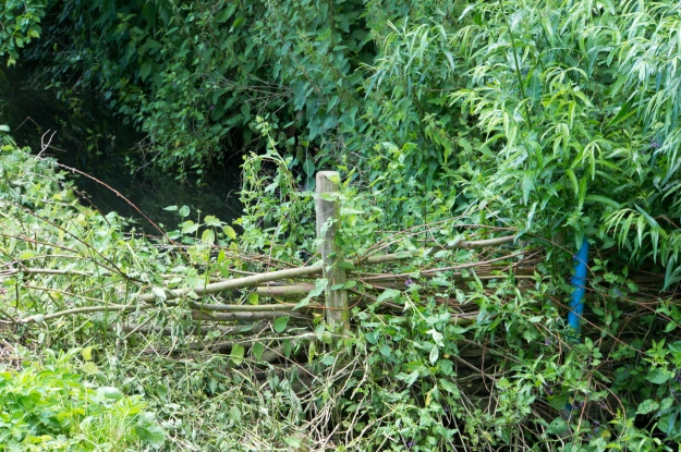 A willow structure in a farm ditch, used to hold up high flows and reduce flood risk further downstream.