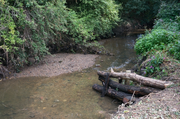 Woody debris securely installed in the bank of the river.